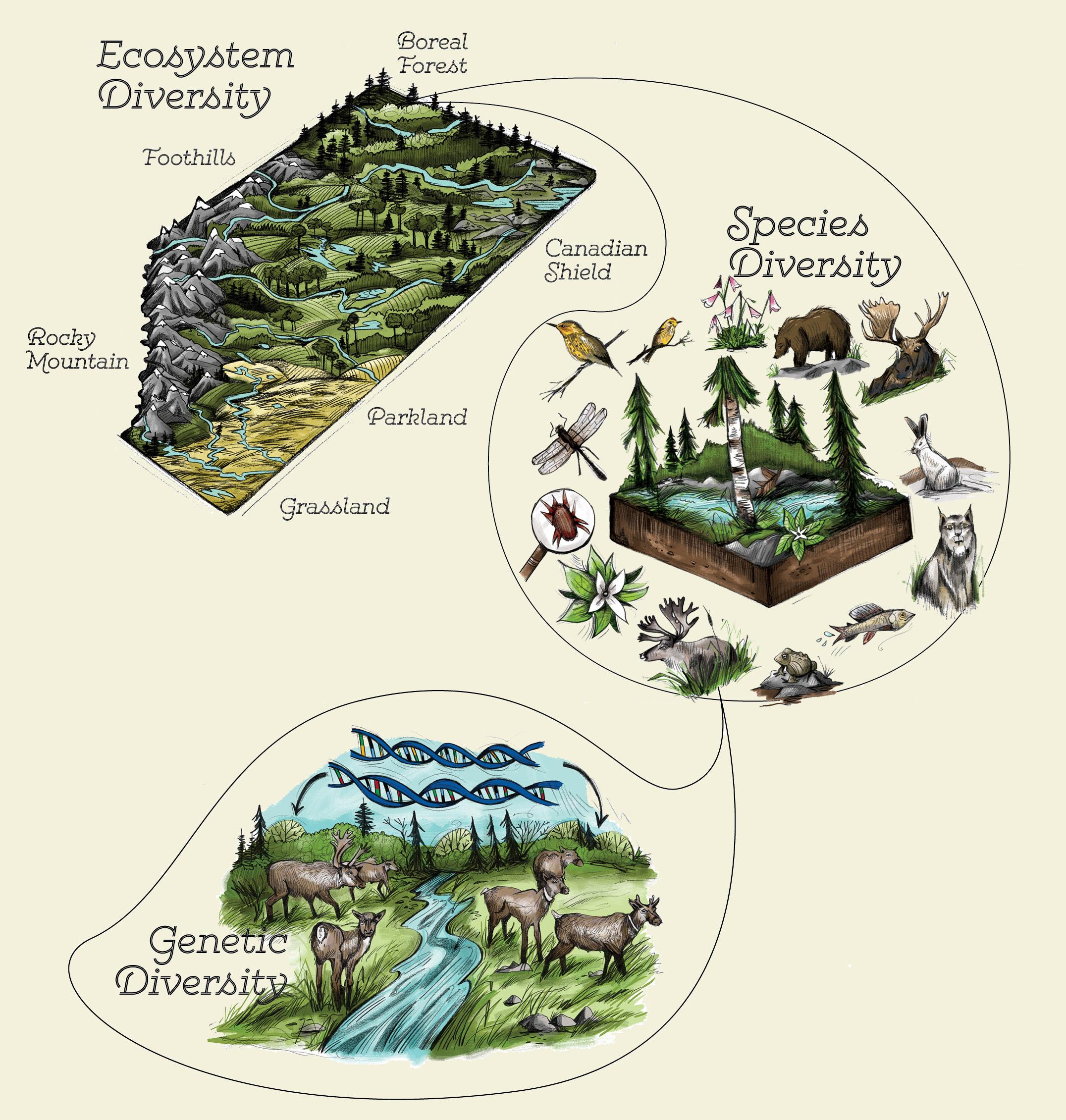 Biodiversity Studies | Harvard Forest